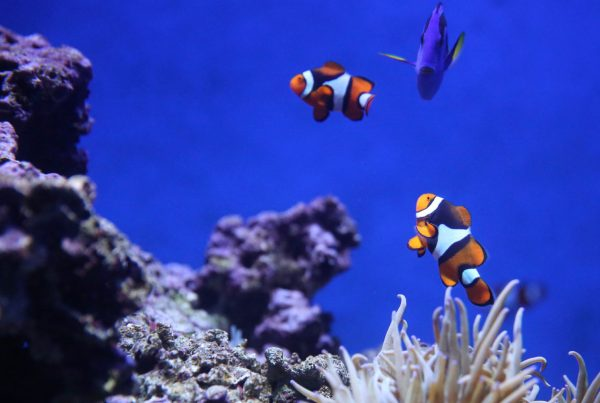 Our coral reefs are dying. Due to carbon emissions.